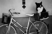 Doggie on a bike