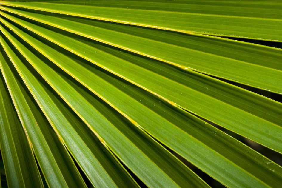 Palm frond, Barkers, Grand Cayman