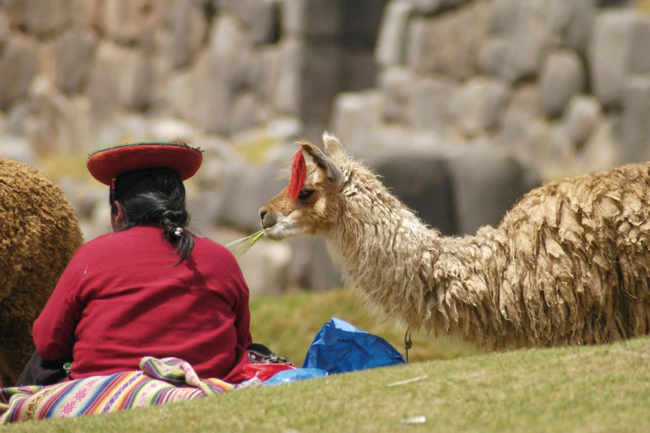 Alpaca and his mum, Pisac