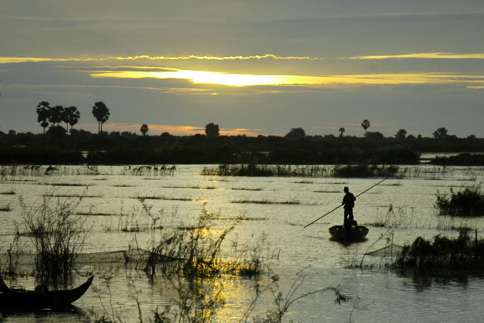 Morning in the rice fields, Siem Reap