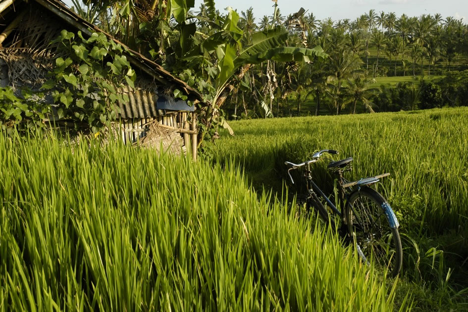 Bike in the Ricefields, Bali
